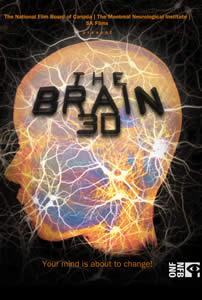 The Brain 3D