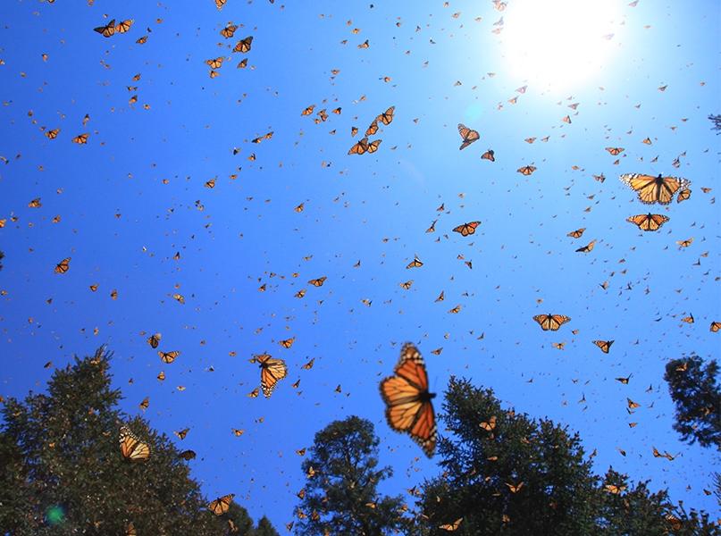 Still - Monarchs in the Sky2 - FOB - SK Films